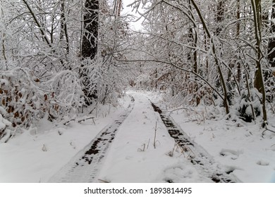 Road iin the forest by the winter