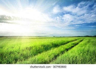 Road into field with bright green grass under blue sky
