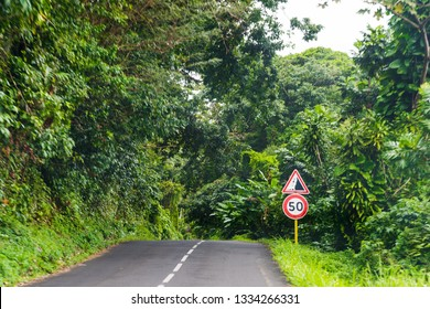 Road into the jungle in Basse Terre in Guadeloupe, French west indies. Lesser Antilles, Caribbean