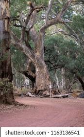Road into Wilpena Pound from resort, SA, Australia