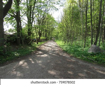 A road into the woods
