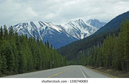 The road and Kootenay forest - Kootenay National Park, British Columbia, Canada