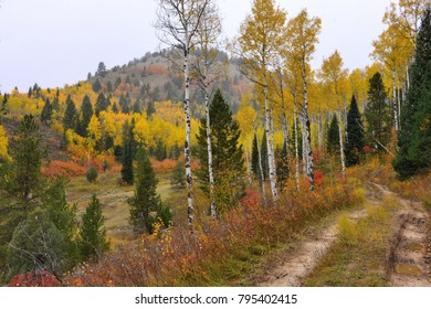 Road leading into the fall forest with colorful tress as the snow starts falling
