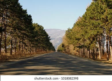 The road leading to the mountains. Along the road are pine trees.