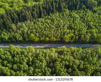 road leading through a forest birds eye view