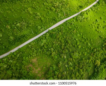 Road leading through green bushland