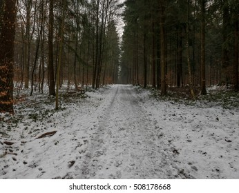 A road leading through a snowy forest in winter