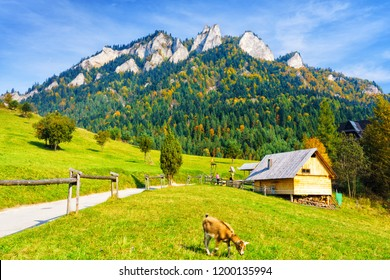 Road leading to Trzy Korony (Three Crowns) peak in Pieniny National Park, Poland. Scenic view on a warm sunny autumn day with a pasture, hut and a grazing goat.