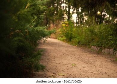The road leads through a beautiful park. Juniper bush