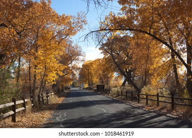 a road leads through golden cottonwoods in western colorado