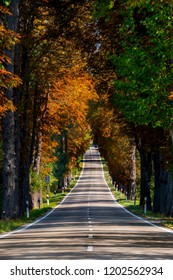 Road lined with trees, with autumn colors