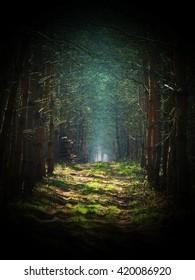 Road in magic dark forest, dark vignetting, mist background