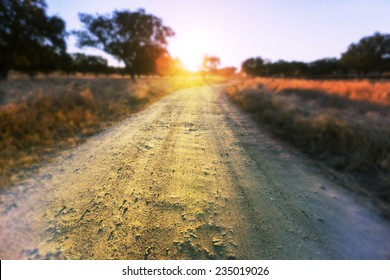 Road in  meadows