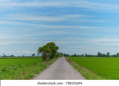 Road in the middle of paddy field
