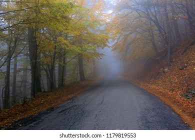 Road in a misty beautiful autumn forest