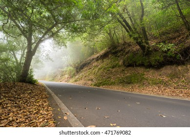 Road in the misty forest.