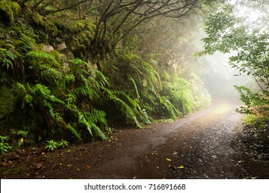 Road in the misty forest