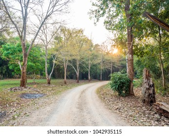 A road in the morning forest