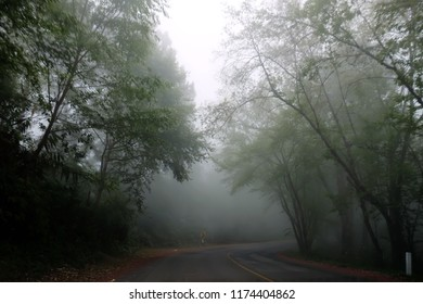 The road in the morning mist. Surrounded by rainforest trees in Asia.