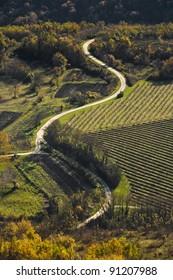 Road in the Motovun valley