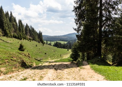 Road in mountains with pine trees in spring