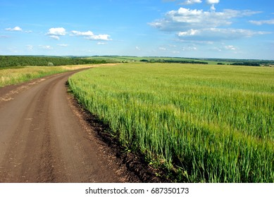 Road near the field with green wheat (oats) on the hills, countryside on the background, cloudy sky, Ukraine