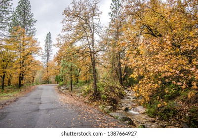A road next to a stream in Castle Crags State Park in Northern California. The trees are changing to yellow and orange as the leaves fall during autumn