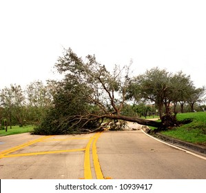 Road obstructed by fallen tree damaged by wind storm [isolated on white sky].