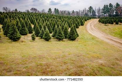 Road on Christmas Tree Farm