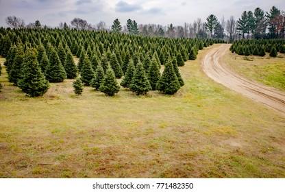 Road on Christmas Tree Farm
