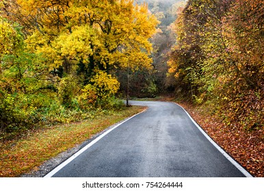 Road on the forest in autumn