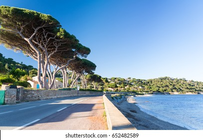 road on french riviera with sea and pines in south France