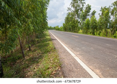 Road on nature
