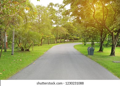 Road in the park and tree around with morning sunlight.