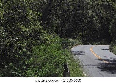 A road passing through the woods. On the way from Sausalito to Muir Woods.