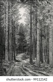 """The road in the pine forest. Engraving by Rashevsky  from picture by Shishkin. Published in magazine """"Niva"""", publishing house A.F. Marx, St. Petersburg, Russia, 1899"""