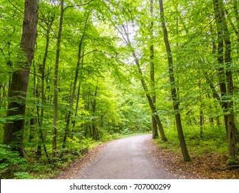 Road in the Primeval Beech Forest, Hainich National Park, Germany