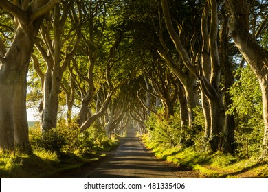 A road runs through the Dark Hedges tree tunnel at sunrise in Northern Ireland.