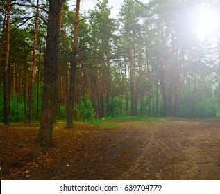 Road in Russian forest. The sun is shining