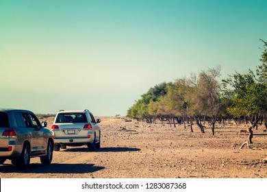 Road to Safari Park on Sir Bani Yas Island, Abu Dhabi, United Arab Emirates.