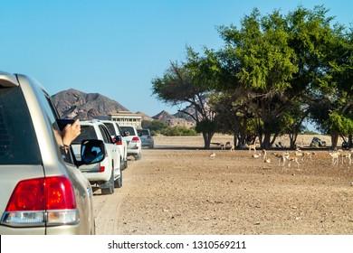 Road to Safari Park on Sir Bani Yas Island, Abu Dhabi, United Arab Emirates