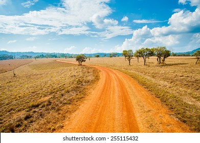 Road of savanna Field in summer season.