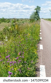 Road side with beautiful blossom summer flowers by  a road across the great alvar plain Stora Alvaret on the swedish island Oland, the island of sun and wind