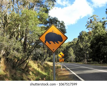 Road Sign Showing a Black Wombat on a Yellow Background  as a Warning to Motorists that Wombats Might be Crossing this Forested Stretch of the Oxley Highway near Mt. Seaview, NSW, Australia