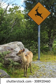 Road sign surrounded by trees, with a young deer