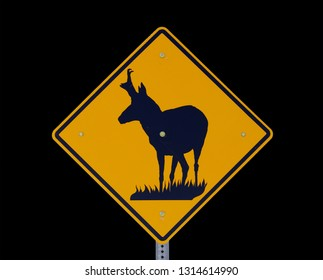 road sign warning of pronghorn antelope crossing the road with black background