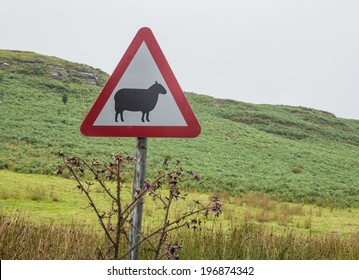 Road sign warning for sheep crossing