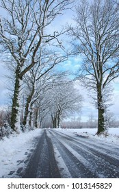 Road with snow covered trees along roadside