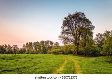 Road in summer sunset field