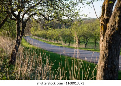 A road surrounded by apple trees